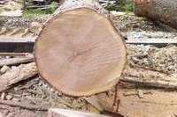 Fresh-Cut White Oak Logs
