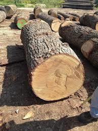 Oak White Wood Fir Logs