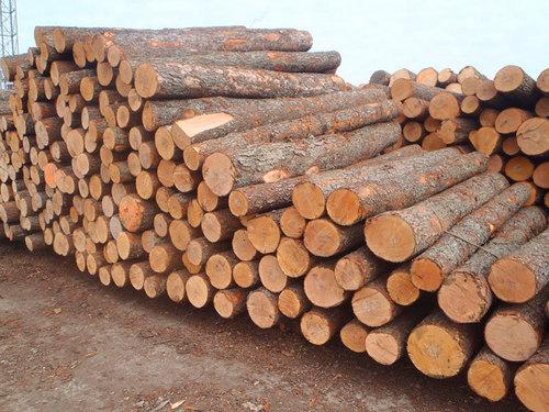 Spruce Lumber Logs