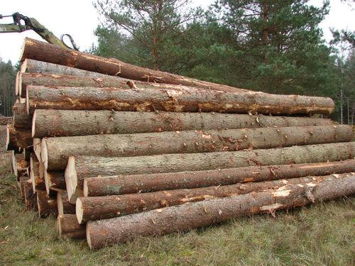 Spruce Logs
