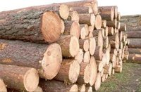 The Timber We Use