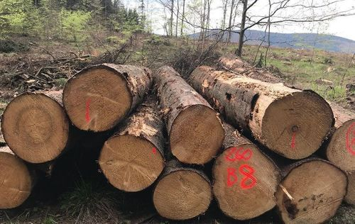 Supply Of White Wood Logs-spruce