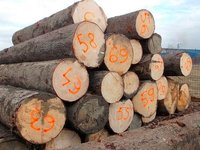 Spruce And Red Meranti Sawn Timber Logs