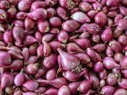Shallots Onion