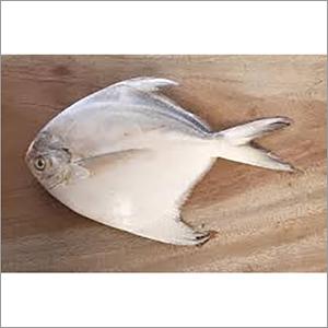 Frozen White Pomfret 4-5 pcs per kg