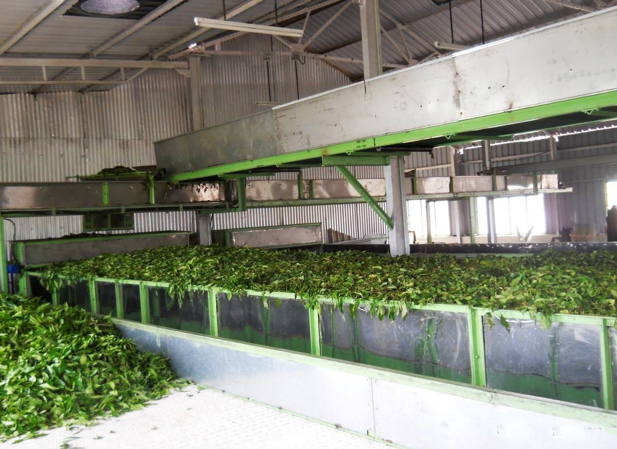 TEA PROCESSING PLANT MACHINERY