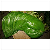 Fresh Betel Leaves Bangla