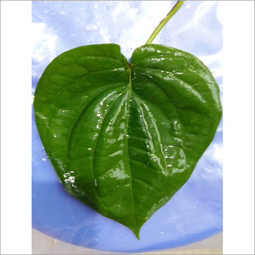 Bangla Leaves