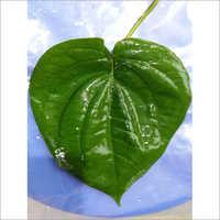 Bangla Leaves