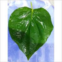 Mitha Leaves