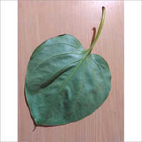 Betel Leaves Bangla