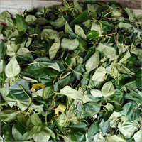 Dried Betel Leaves