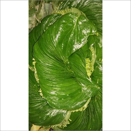 Sweet Betel Leaves