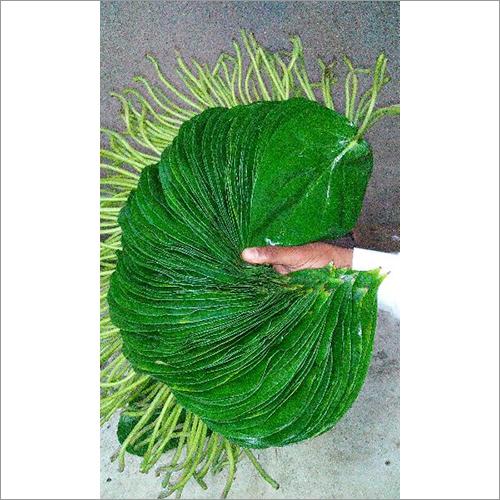 Khari Leaf