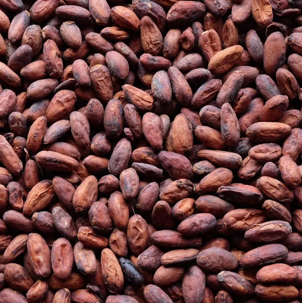 Dried Cocoa Bean