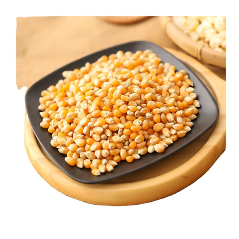 Dried yellow corn seed