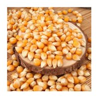 Bulk Yellow Corn