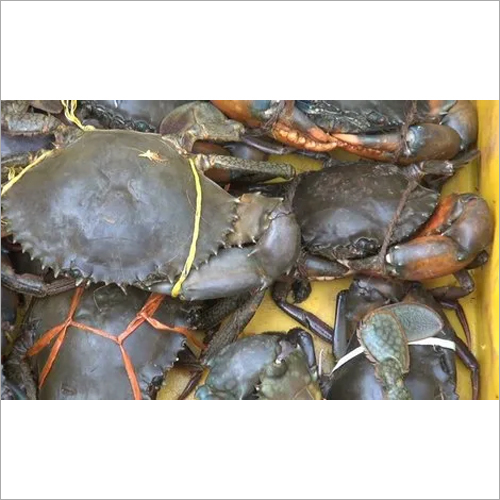 Seafood Crabs