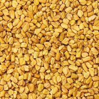 Fenugreek seed, Fenugreek Powder