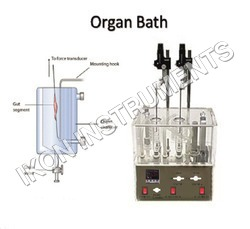 Student Isolated Organ Bath