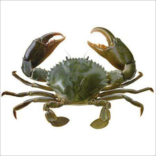 Mud Crab (Dhebaro Karachalo)