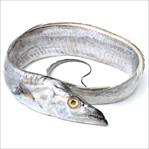 Silver Ribbon Fish (Baga Fish)