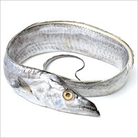 Silver Ribbon Fish (Baga Fish)