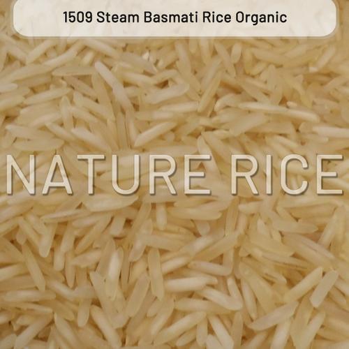 Organic 1509 Golden Sella Basmati Rice