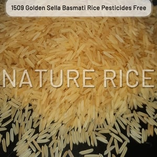 Organic 1509 Golden Sella (Parboiled) Basmati Rice