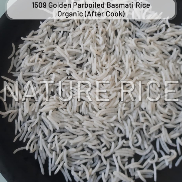 Organic 1509 Golden Sella (Parboiled) Basmati Rice