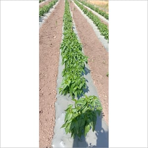 Agriculture Products Quality Consultancy Services