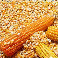 Red And Yellow Corn
