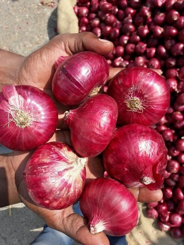 Kolkata and Bangladesh Quality Onion
