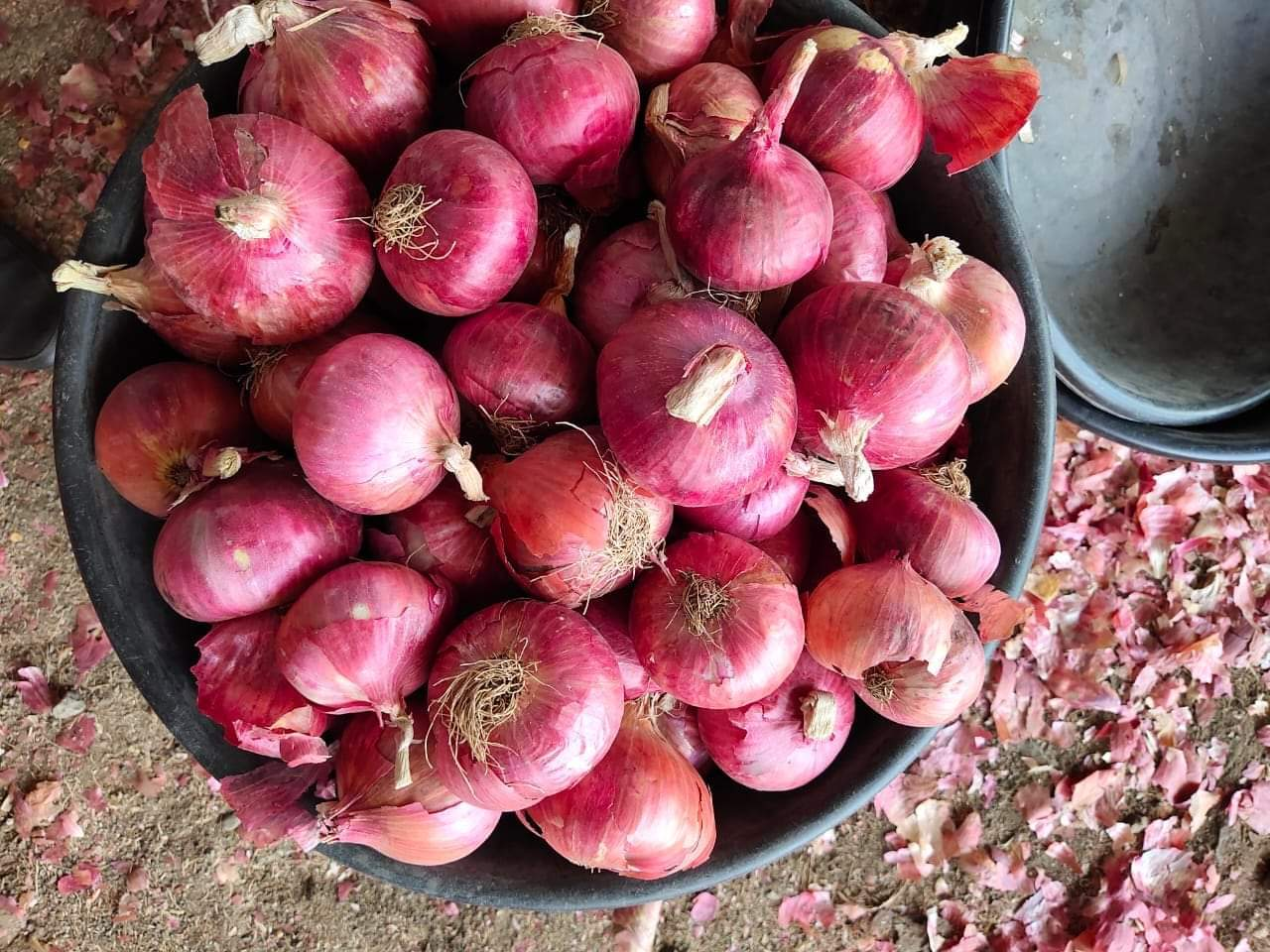 UP Bihar And Jharkhand Quality Onion