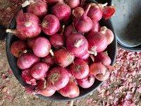 UP Bihar And Jharkhand Quality Onion