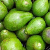 Avocados Fresh