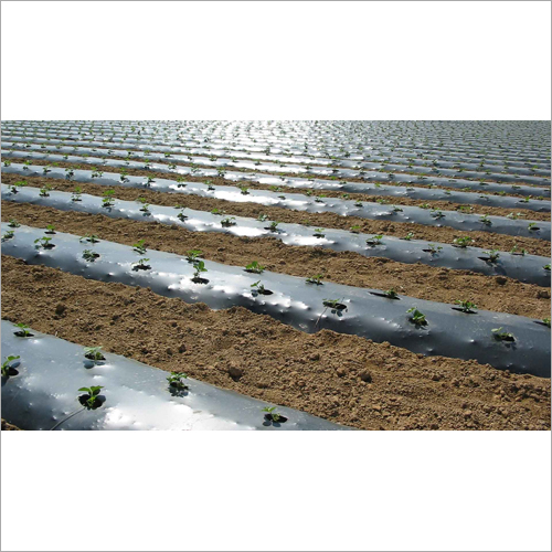Mulching Film For Agriculture Farming