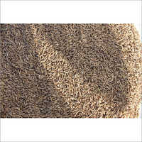 Europe Quality 995 Cumin Seeds