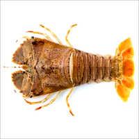 Frozen Lobster (Kako)