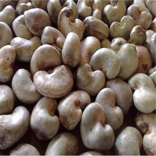Raw Cashew Nuts In Shell For Sale