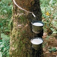 Natural Rubber Cup Lump With Drc Of 72%