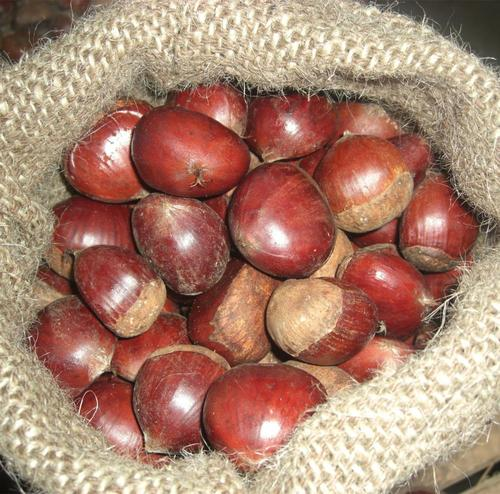 Dehydrated Malabar Chestnuts For Export