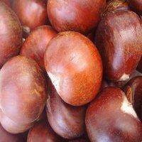 Sweet Chestnut Sale Price