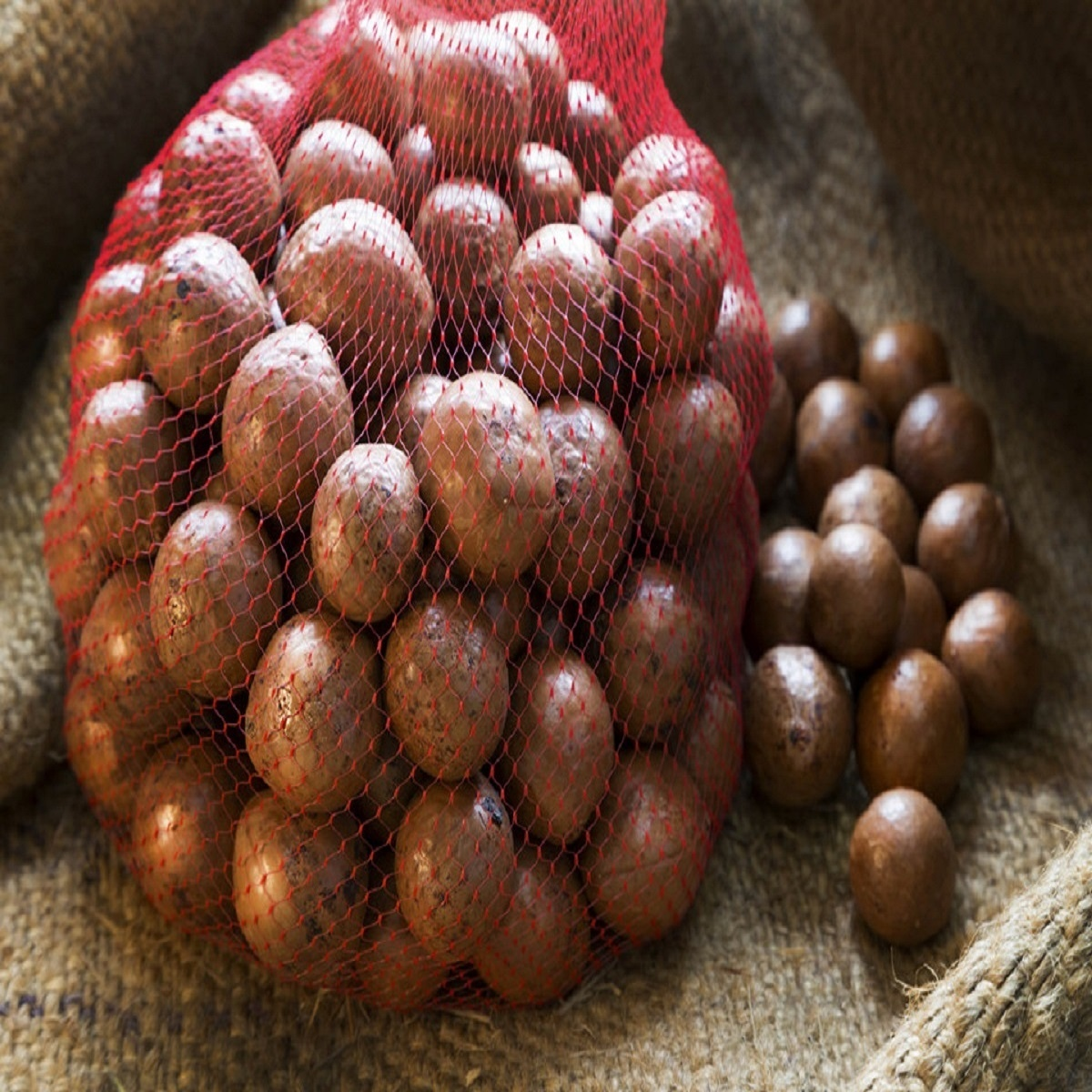 Best High Quality Macadamia