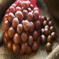 Best High Quality Macadamia