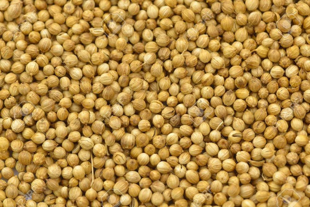 100% Organic Coriander / Coriander Seeds High Quality