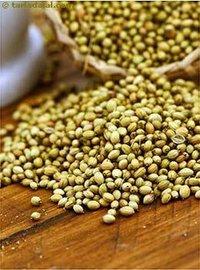 APEDA Certified Coriander Seeds