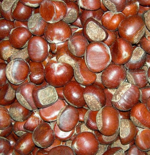 High Quality Pure Coriander Seeds Split Coriander Seed