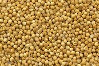 High Quality Pure Coriander Seeds Split Coriander Seed