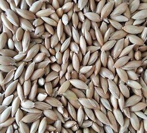 White Sesame Seeds
